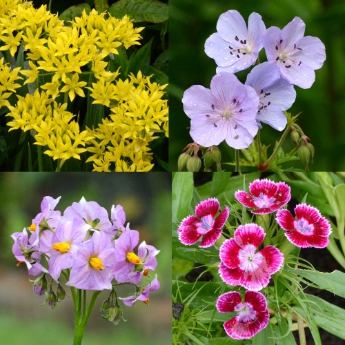 four flowers