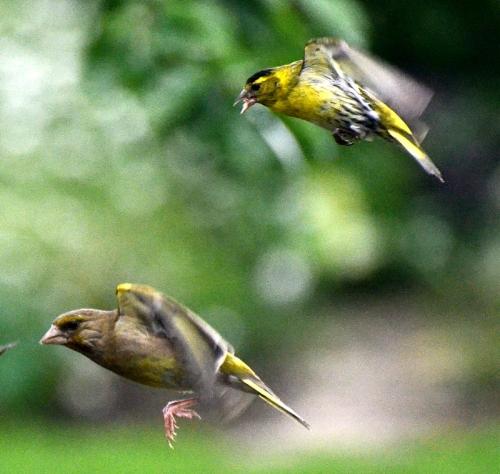 birds queueing