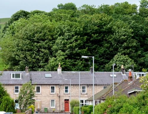 Trees behind Eskdaill Street