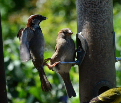 closely stacked sparrows