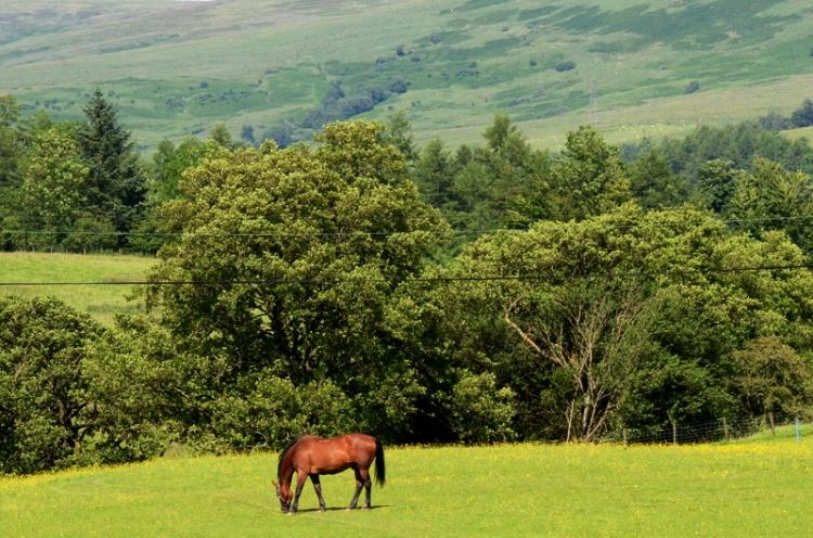 horse at hallcrofts