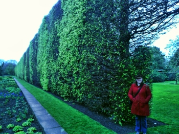 big hedge