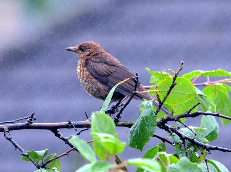bird in plum tree