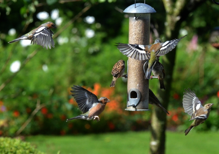 all action at the feeder