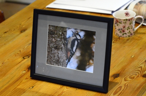 Framed woodpecker