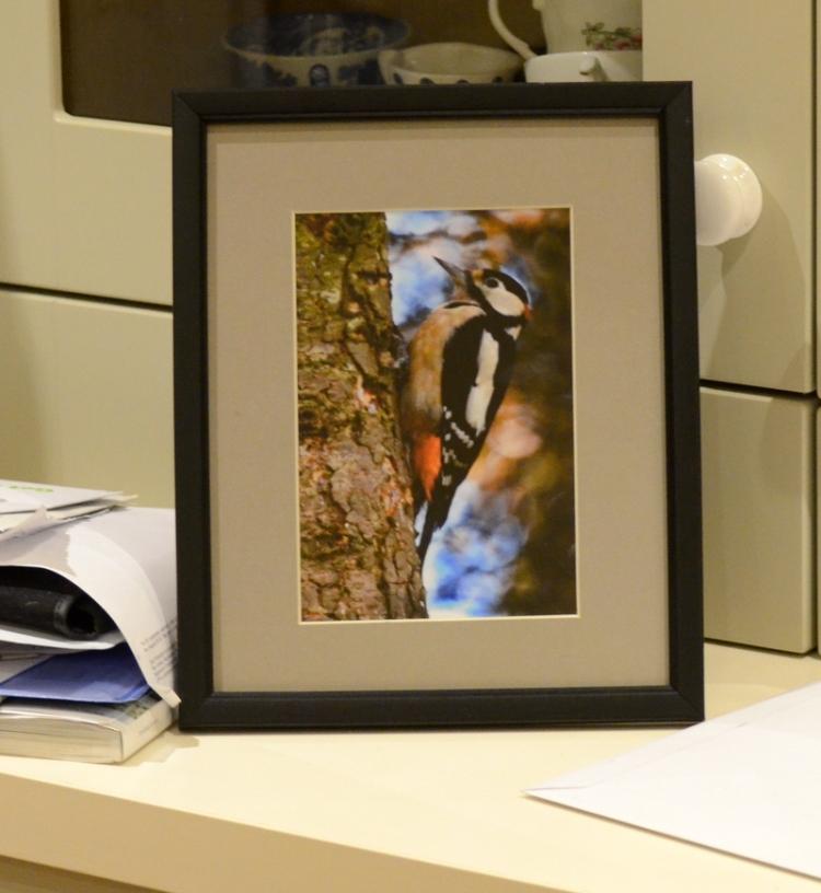 Portrait woodpecker