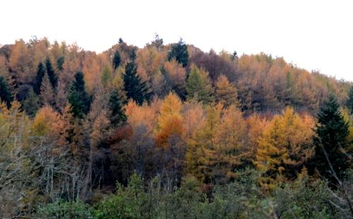 Riverbank woods