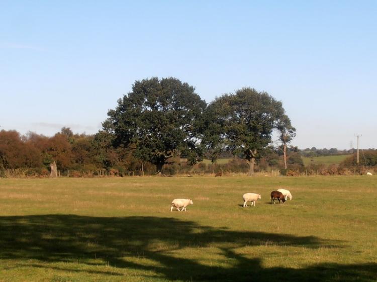 Near Smithfield