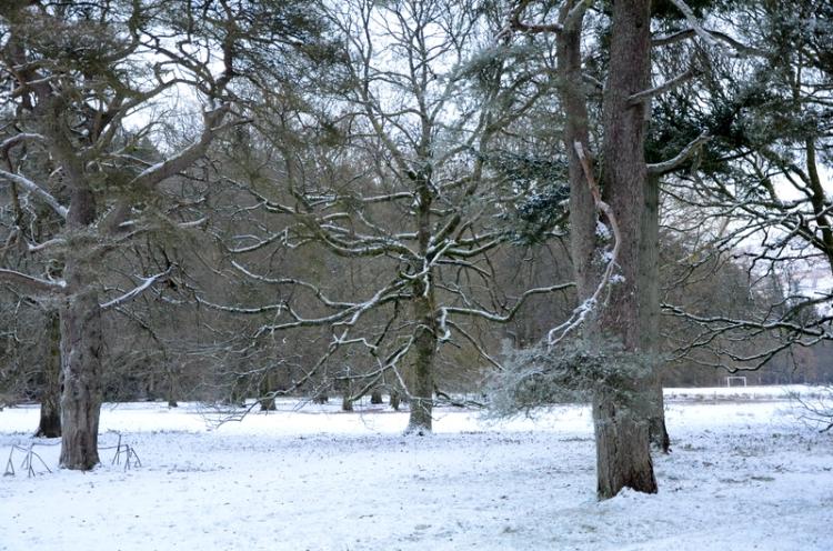 Winter on Castleholm