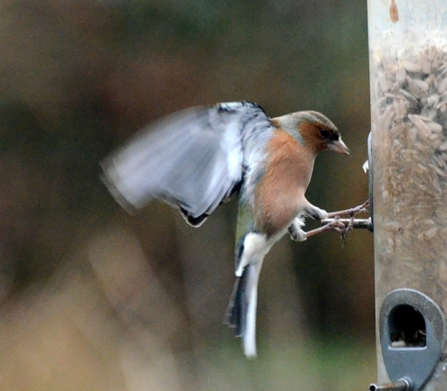 One foot on the bar and one on the feeder