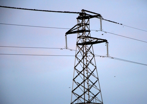 starling pylon