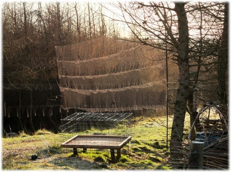 ringing nets
