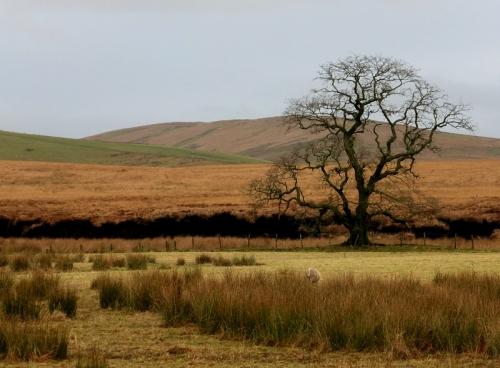 bigholms tree colour