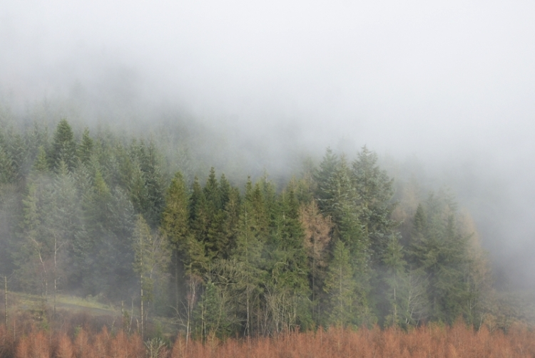 The woods below Warbla were wreathed in mist