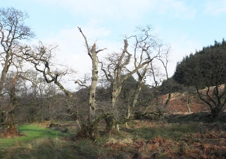 three battered trees