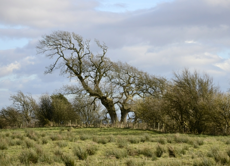 trees on Solway shore