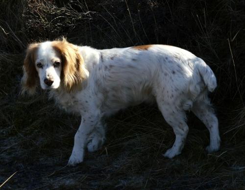 Kenny's dog