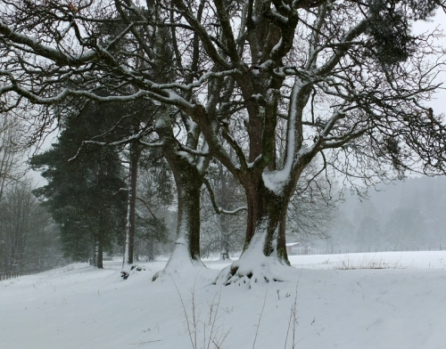 The snow wasn't clinging like the last fall but these trees collected a share of it.