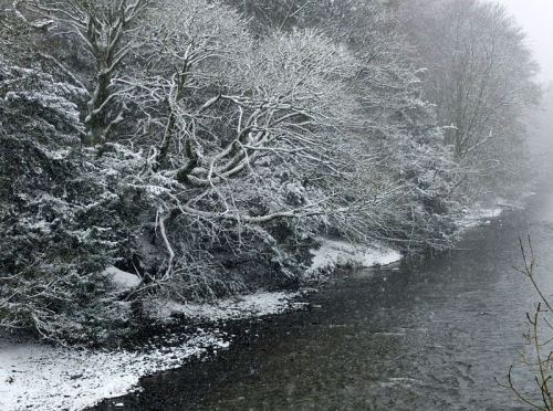 Trees on the Esk