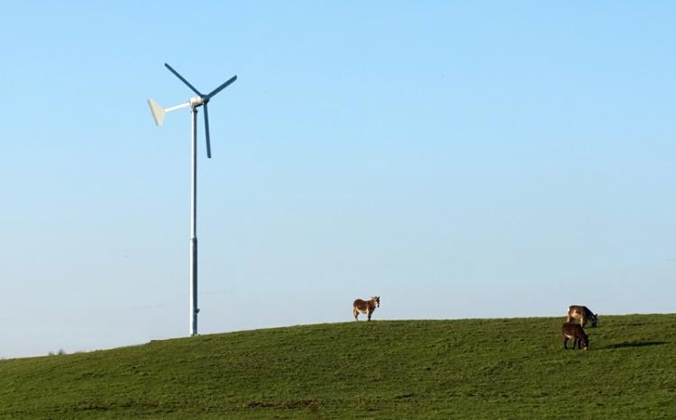 Donkey and windmill