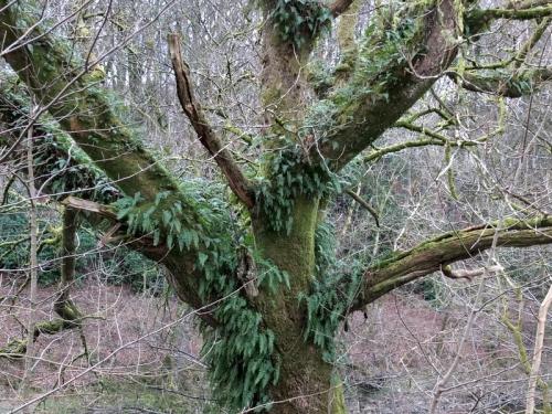 aerial fern garden