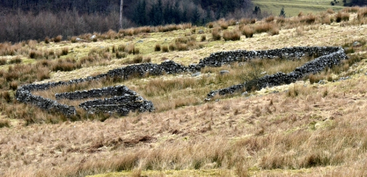 sheep fold