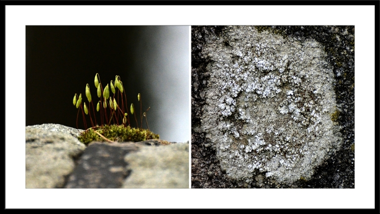 moss and lichen on wall and concrete post