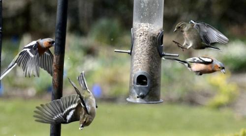 Indiscriminate winging