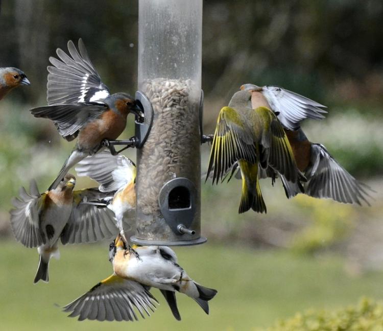 community winging