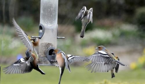 feeder flying