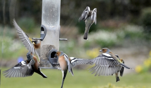 feeder flying