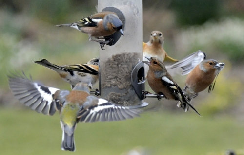 feeder flying and conversation