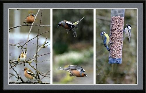 vertical birds