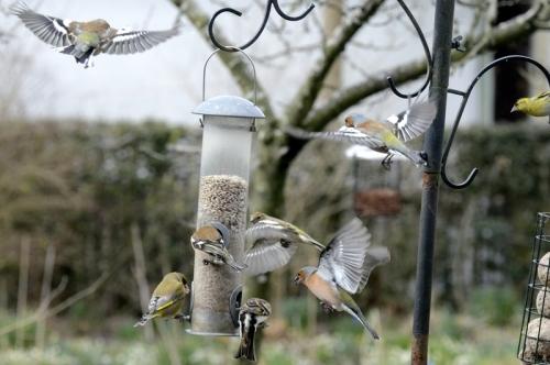 mixed bag of birds