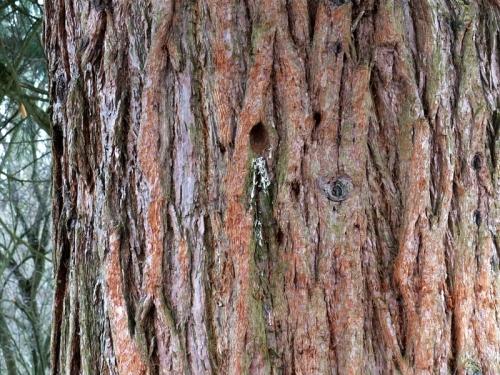 tree creeper refuge