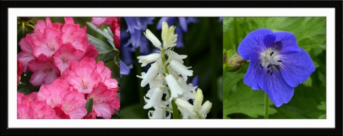 Rhodie, white bluebell and geranium