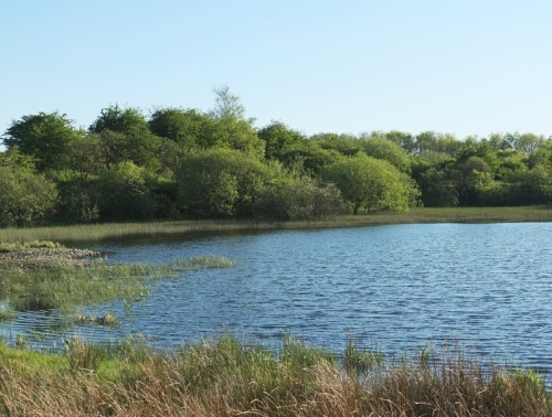 Ponds at Longtown