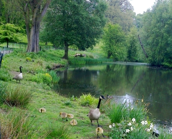 by the lake, Kenwood