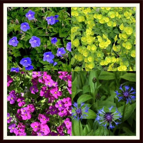 colourful quartet