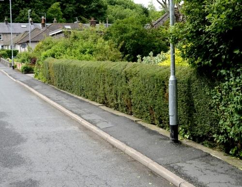 hedge trimmed