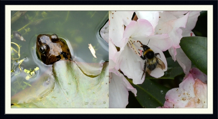 frog and bee
