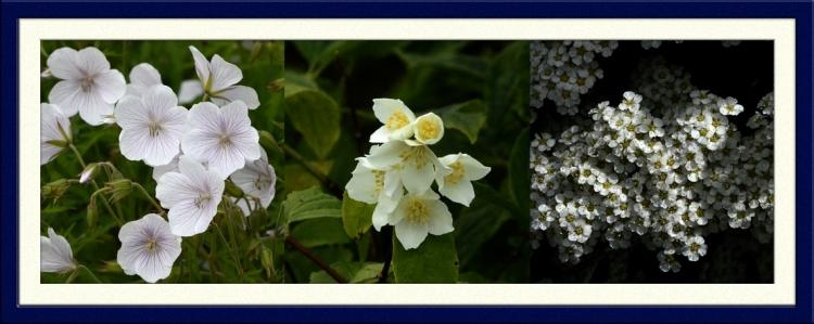 geranium, philadephus and spirea