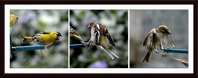 bird encounters