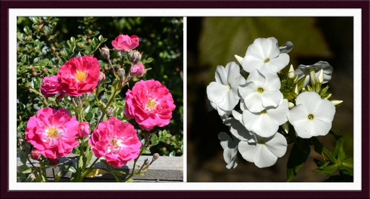 back fence flowers