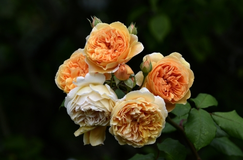 Princess Margareta