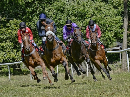 leaping racehorses
