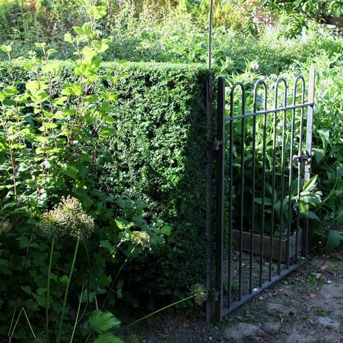 trimmed hedge