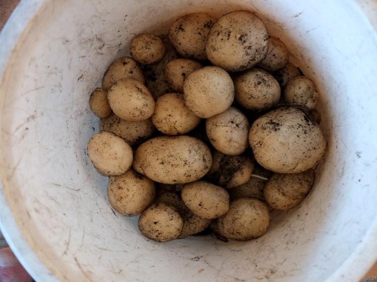 potatoes in a bag