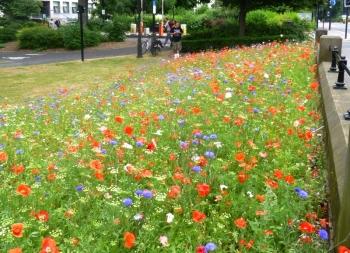 newcastle poppies