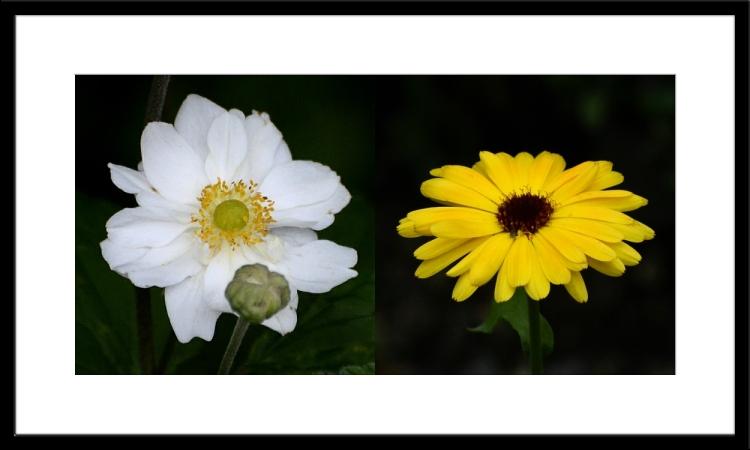 Japanese anemone and marigold